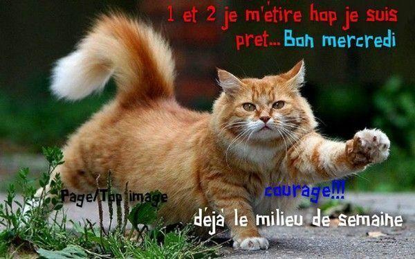 """Résultat de recherche d'images pour """"bon mercredi humour"""""""